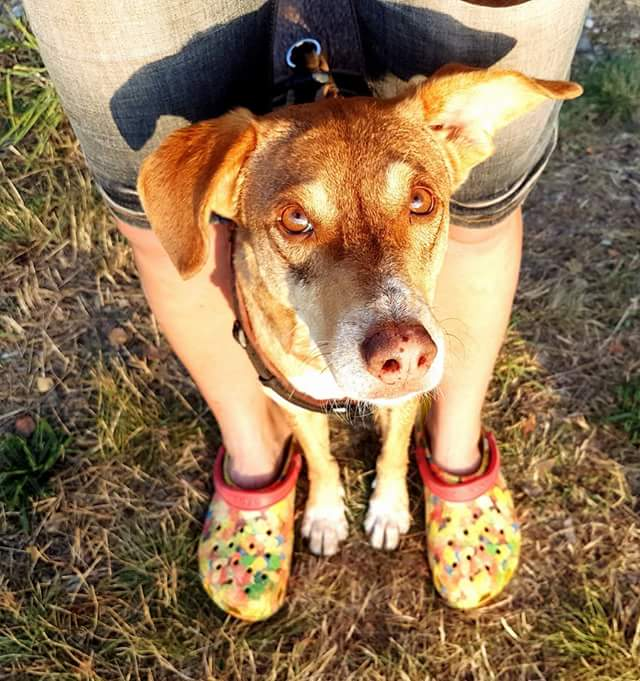 Do As I Do Dog Training Claudia Fugazza